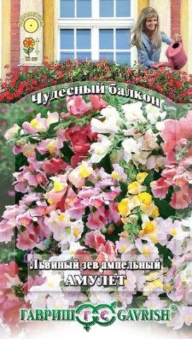 Львиный зев ампельный – все о выращивании необычного цветка из семян