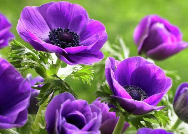 Лучшие морозостойкие многолетники для уральских садов