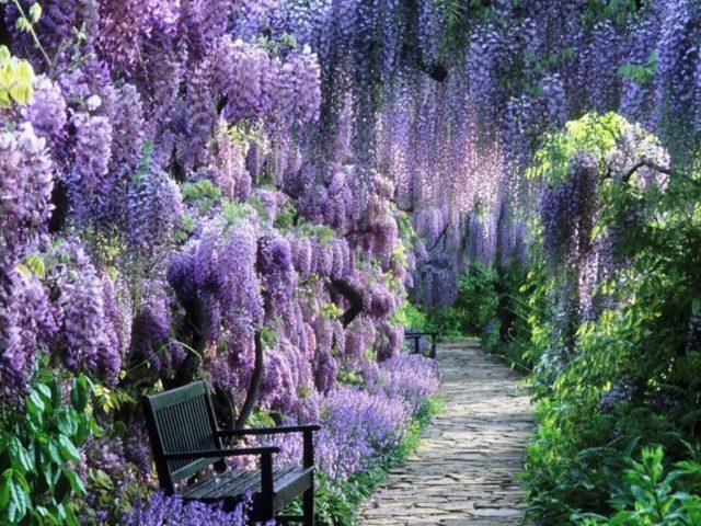 Топ 15 роскошных многолетников, цветущих все лето – красота с весны до осени