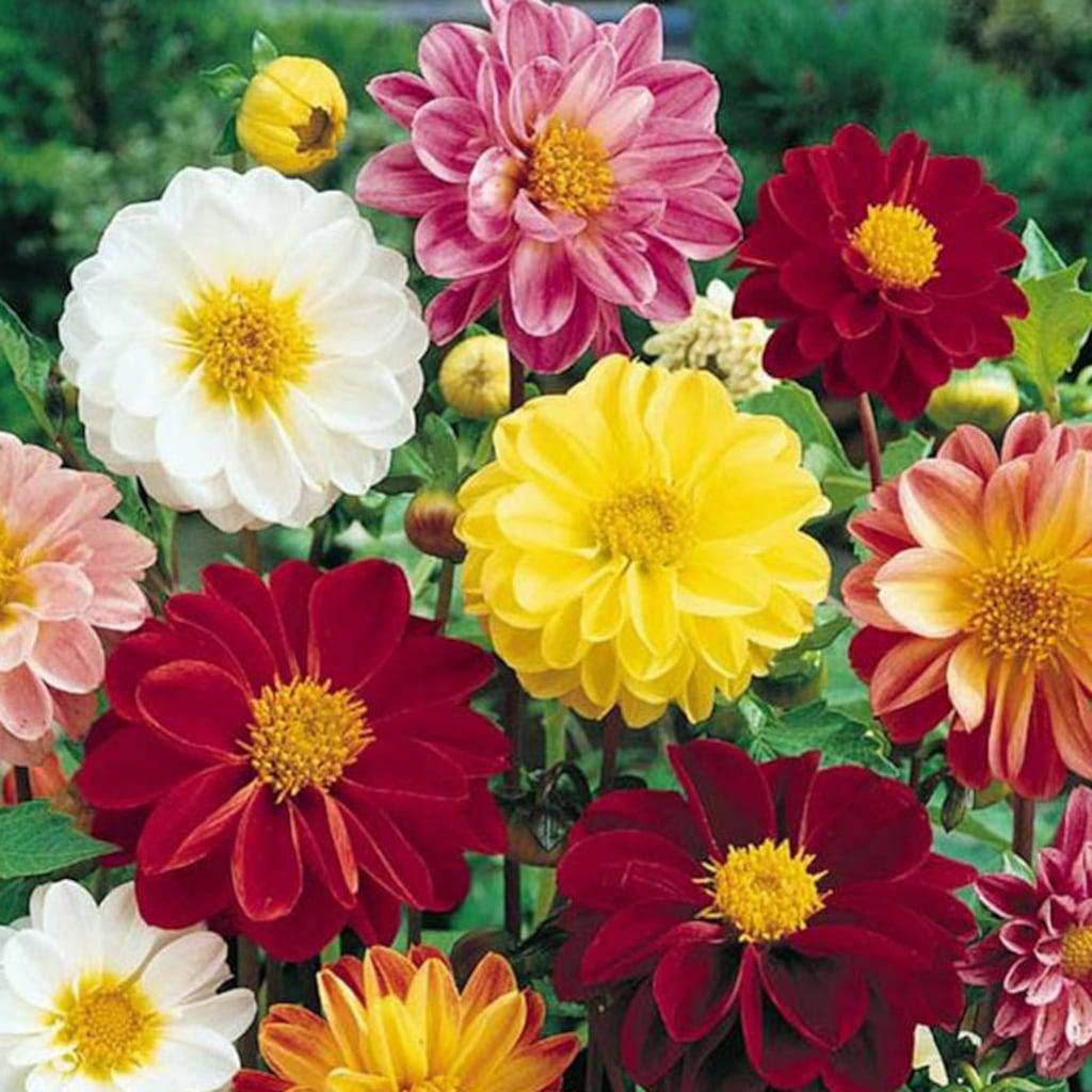 быстрее убрать цветы веселые ребята фото на клумбе этой земле жили