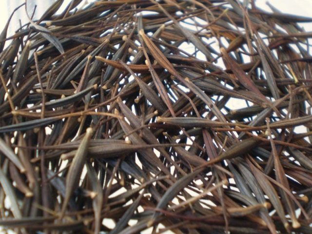 Выращивание космеи из семян: практические советы новичкам