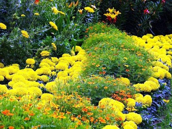 Осенние желтые цветы