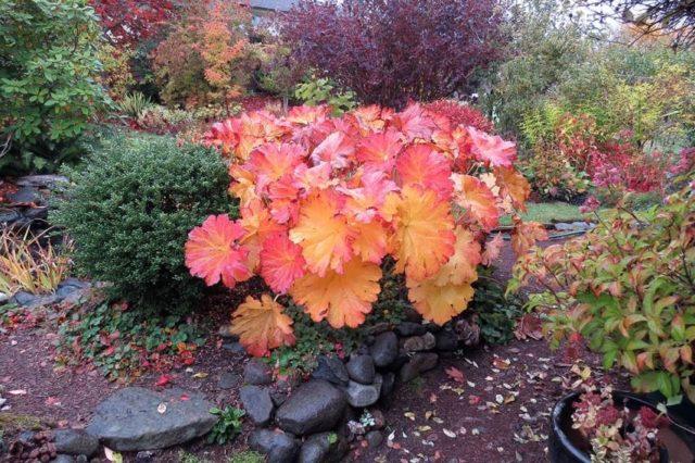 Высокорослые многолетние цветы-гиганты – потрясающее украшение клумбы