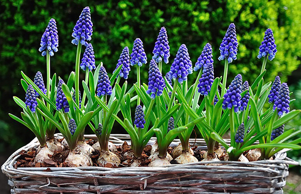 Обзор самых неприхотливых и долгоцветущих многолетников для сада и дачи