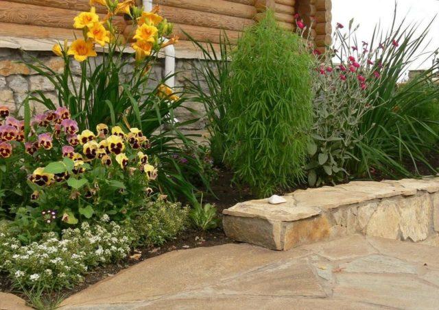 Можно ли кохию выращивать в домашних условиях?