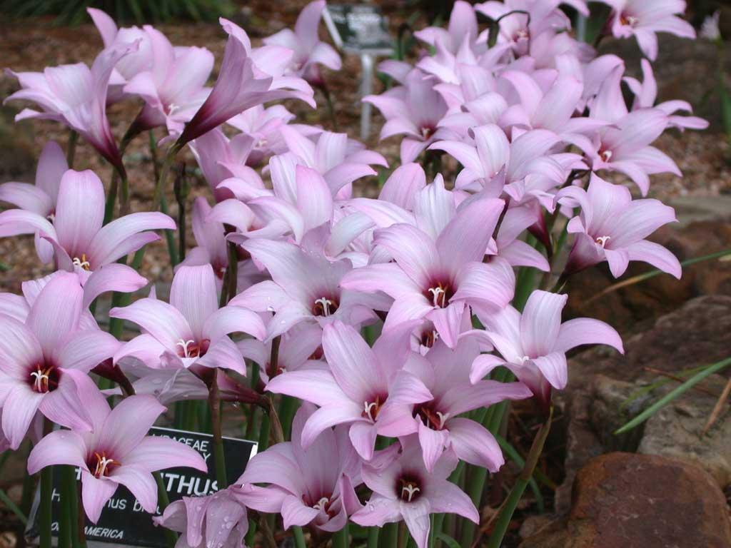 Ранние весенние садовые цветы фото и названия