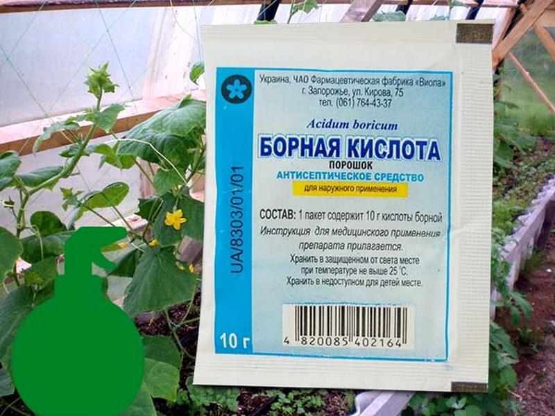 Как правильно опрыскивать и обрабатывать помидоры борной кислотой
