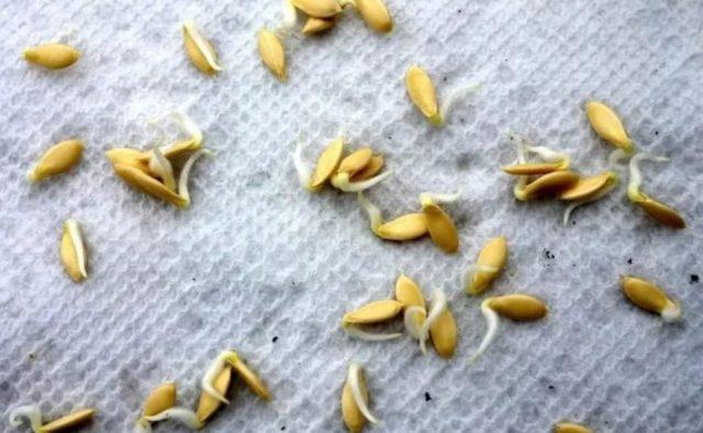 Удобрение Малышок для перцев и томатов: секреты применения + отзывы
