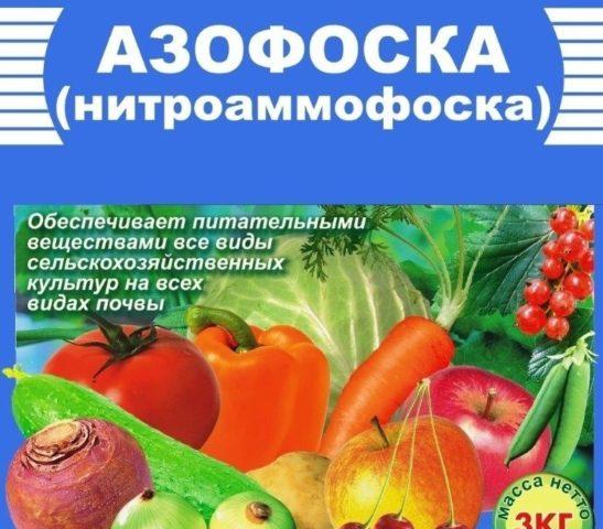 Подкормка томатов Азофоской: правила применения + советы специалистов