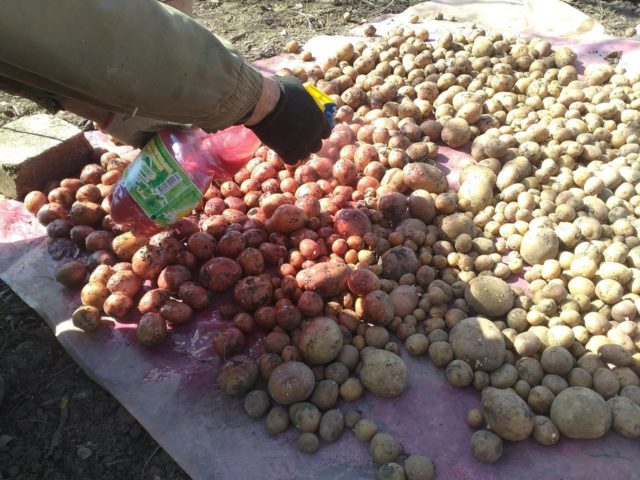 Картофельная гниль