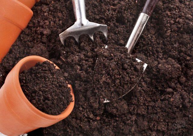 Удобрения для перца в открытом грунте для богатого урожая