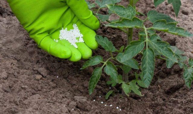 Удобрения для ускорения роста помидор: чудодейственные рецепты