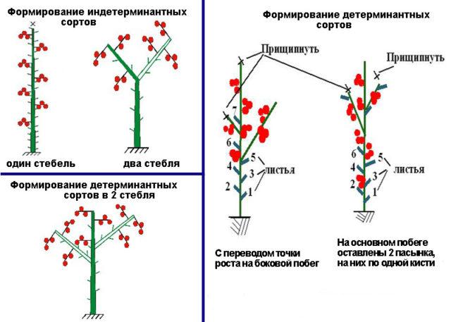 Формирование томатов в открытом грунте: секреты повышения урожайности