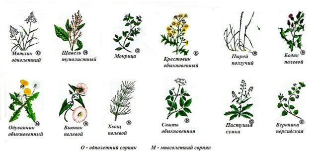 Обработка гербицидами сплошного действия