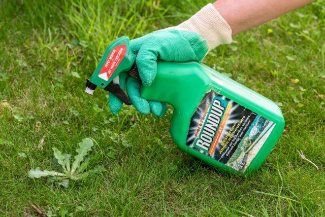 Средство от сорняков Раундап - эффективный чистильщик для сада и огорода