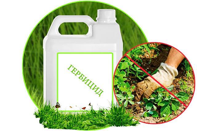 Гербициды от сорняков: виды, какие лучше, применение, рейтинг, отзывы