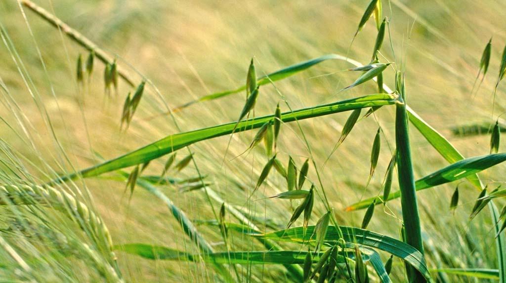Классификация сорных растений и целесообразность борьбы с ними