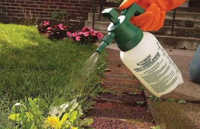 Средство от сорняков Ураган: инструкция + советы по эффективному применению
