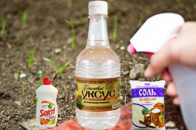 Уничтожение сорняков с помощью уксуса и соли: народные рецепты с отзывами