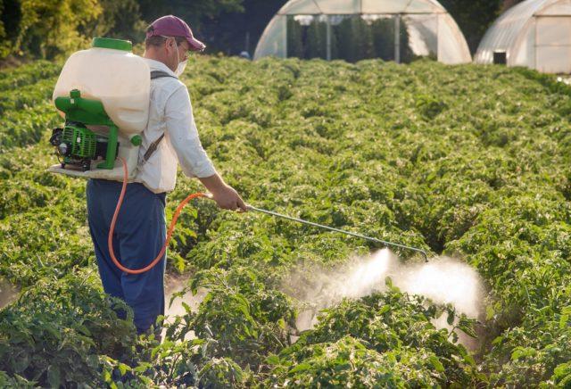 Фунгицид Феразим: преимущества и недостатки препарата для защиты зерновых культур и свеклы