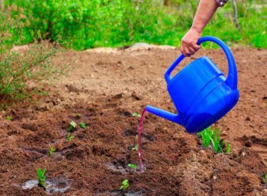 Народные средства от проволочника: простые и эффективные способы избавиться от вредителя