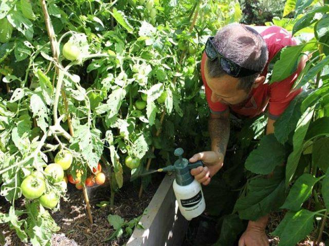 Препарат Ордан - чудодейственное средство для спасения урожая