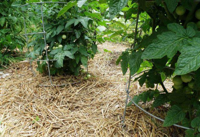 Борьба с сорняками на огороде по-современному: лучшие средства и методы