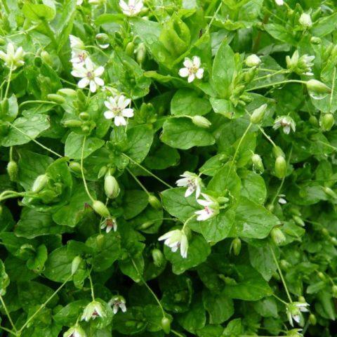Борьба с сорняками на огороде народными средствами – секреты чистых грядок
