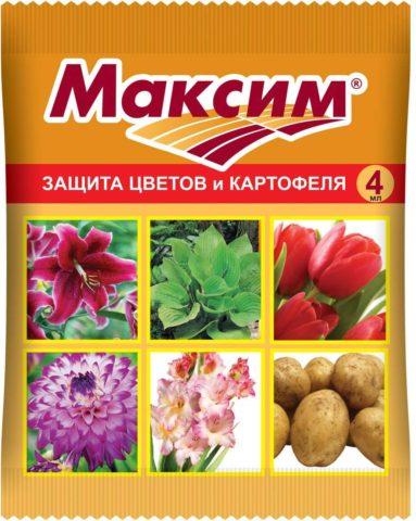 Парша на картошке: как уберечь урожай и избавиться от болезни