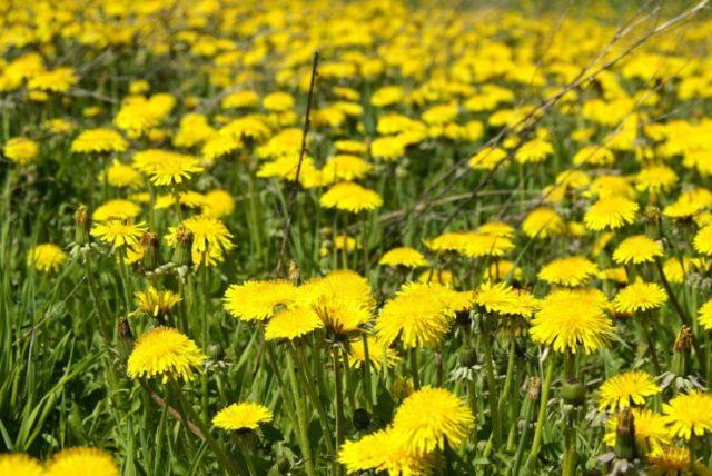 Самые распространенные огородные сорняки: фото и названия