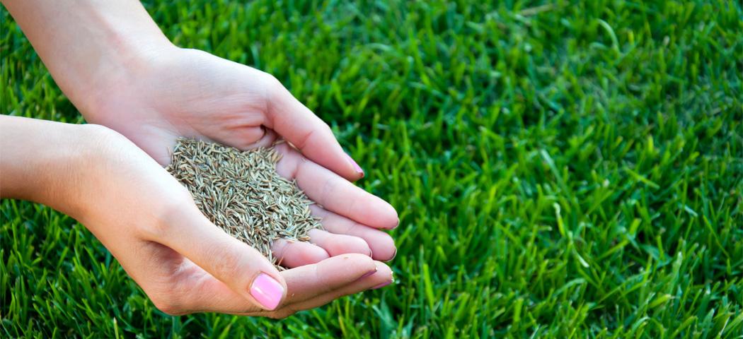 Газонная трава, которая уничтожает сорняки: виды   правила выращивания