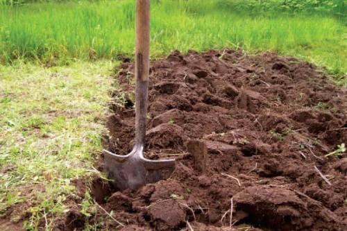 Как разработать заросший участок под огород или газон: простые и доступные способы