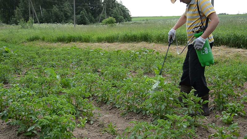 Обработка картофеля от сорняков после посадки и после входов