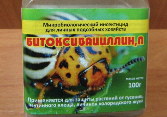 Паутинный клещ в теплице на огурцах: борьба с вредителем + отзывы огородников