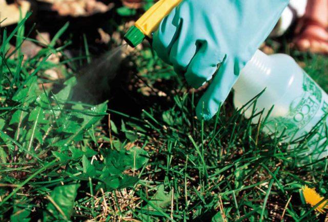 Средства от сорняков на газоне: лучшие гербициды + народные методы для идеальной лужайки