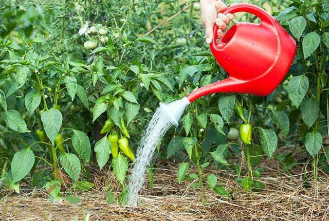5 причин, по которым вы недобираете урожай