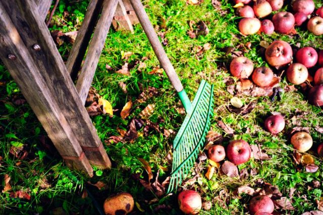 8 важных дел в осеннем саду