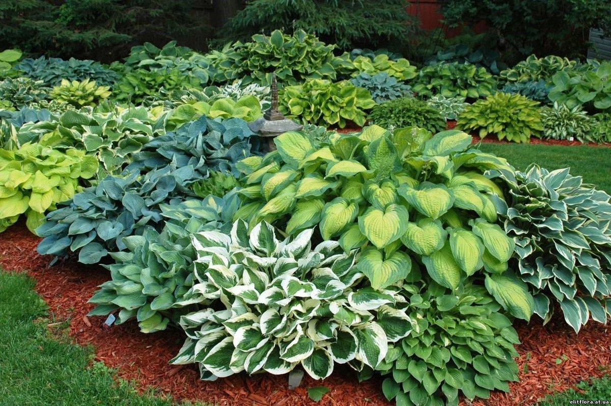 Купить растения для сада олх, самара недорого
