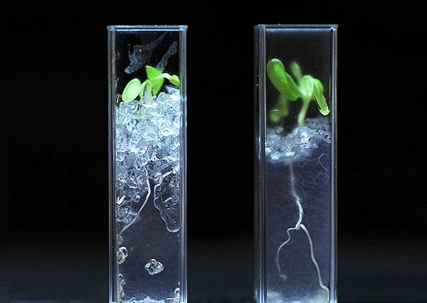 Прозрачный грунт для растений: инновационные методы выращивания