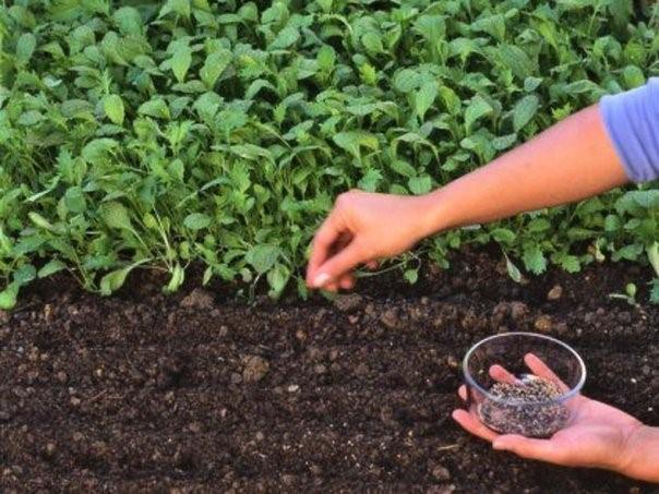 Как создать плодородную почву в саду?