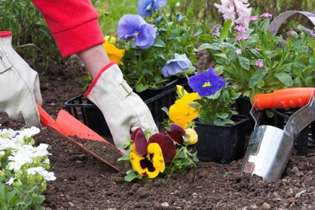Какие растения прекрасно уживутся вместе, а с какими следует избегать соседства