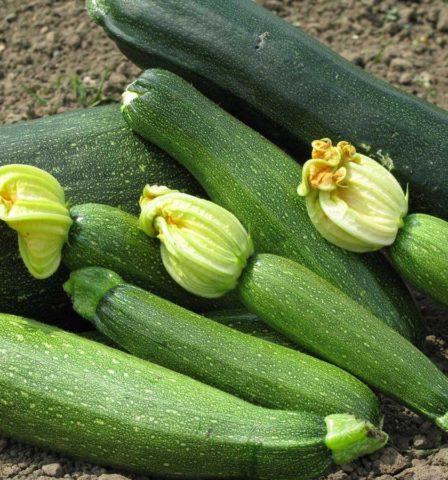 Как правильно хранить кабачки, чтобы они дожили до весны