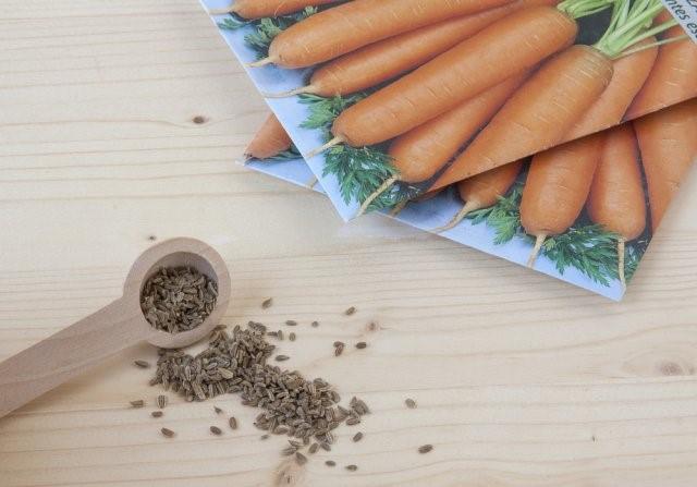 Подзимний посев свеклы и моркови: особенности, рекомендации, подходящие сорта