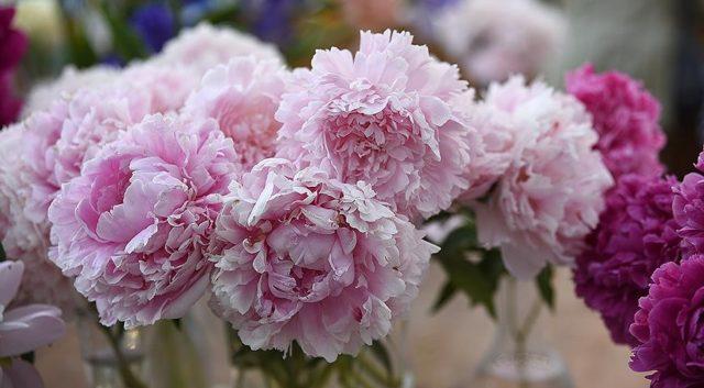Какие цветы нужно высаживать осенью