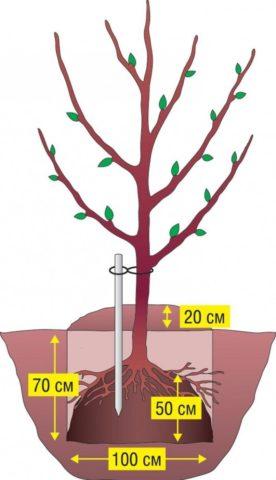Посадочная яма для плодовых деревьев по всем правилам