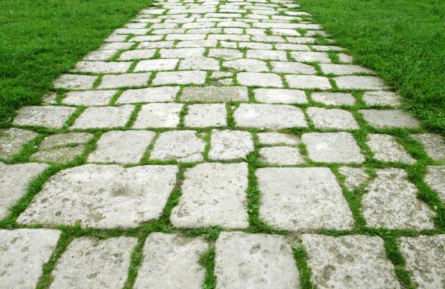 Как бороться с сорняками, которые растут на садовых дорожках