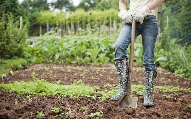 Обработка огорода после уборки помидоров