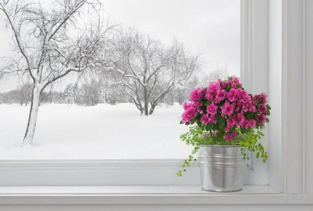 Как правильно высаживать цветущие садовые растения на подоконник в зимний период