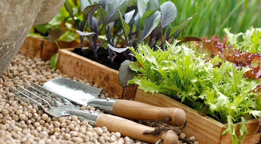 как рассчитать высадку семян