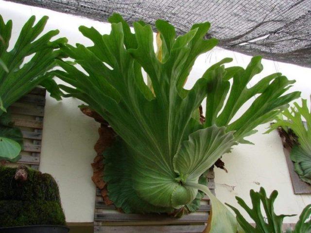 8 комнатных растений, которые редко встретишь даже у любителей разводить цветы
